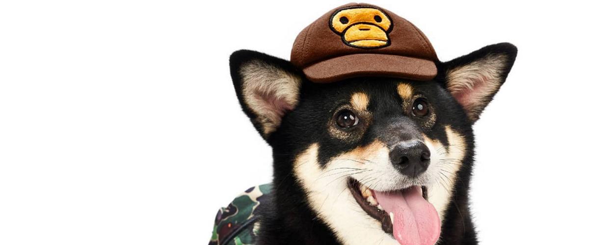 爱犬必备,BAPE® 推出 BABY MILO® 宠物单品